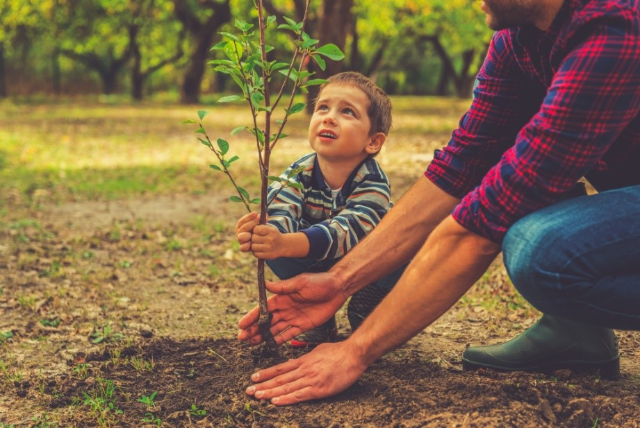 ปลุกต้นไม้